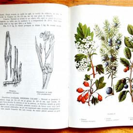 Farm. Corneliu Constantinescu, Ing. Artin Agopian - Plante medicinale din flora spontana