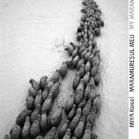 Miya Kosei - Maramuresul meu / My Maramures (cu autograf, hardcover, editie bilingva, romano-engleza)