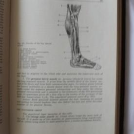 M. Prives, N. Lysenkov, V. Bushkovich - Human anatomy (vol. I, editie hardcover, in limba engleza)