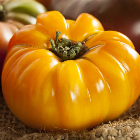Tomate Brandywine Yellow