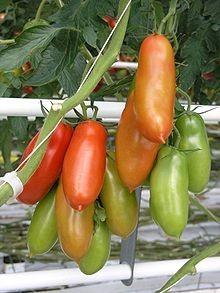Poze Tomate San Marzano