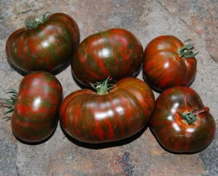 Poze Tomate Chocolate Stripes