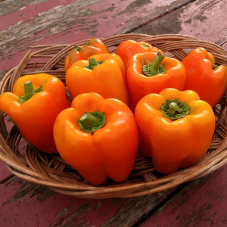 Poze Ardei gras portocaliu Etiuda