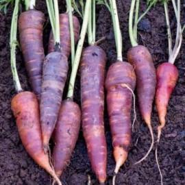 purple morcov să piardă în greutate spaghetti pierderea de grăsime
