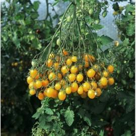 Poze Tomate cherry galbene ILDI