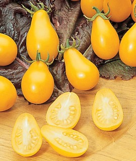 Poze Tomate cherry Yellow Pearshaped
