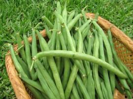 Fasole pitica fideluta verde