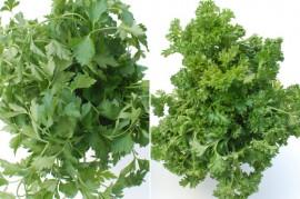 Seminte si plante de gradina / Seminte aromatice si medicinale ...