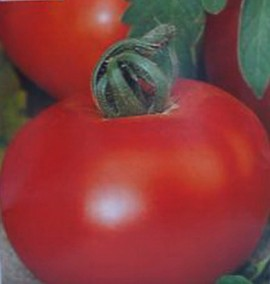 Poze Tomate soi Romanesc DACIA