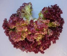 Salata Lollo Rossa