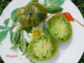 Poze Tomatele Evergreen