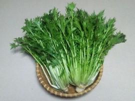 Poze Mizuna verde