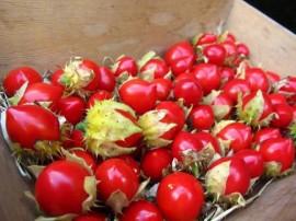 Poze Litchi Tomato-Solanum Sisymbriifolium