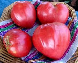 Tomate Inima de bou