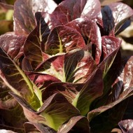 Salata verde Red Romaine-Red Cos Lettuce