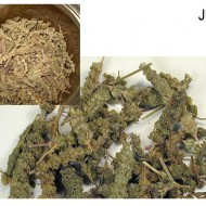 Schizonepeta tenuifolia-Jing Jie