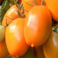 Tomate Orange Icicle