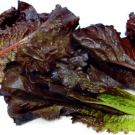 Salata verde Red Romaine-Red Cos Lettuce
