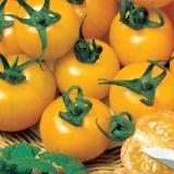 Tomate galbene Goldene Konigin