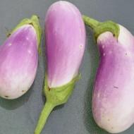 Vinete Lavender Touch
