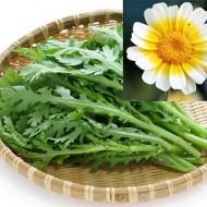 Crizantema comestibila-Shungiku