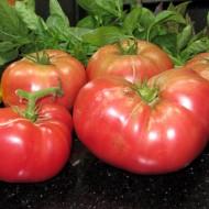 Tomate Pantano Romanesco