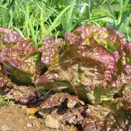 Salata Marvel 4 Seasons