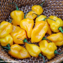 Ardei iute Grenada Seasoning