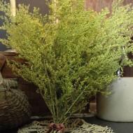 Pelinita-Artemisia Annua