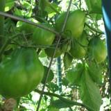 Tomate Black Truffle