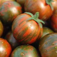 Tomate cherry Black Zebra