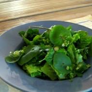 Salata minerului-Claytonia Perfoliata