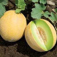 Pepene galben Cantaloupe Honeydew