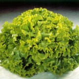 Salata verde creata Lolo Bionda