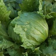 Salata verde Iceberg