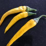 Ardei iute Romanian Yellow