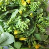 Tatsoi green