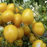 Tomate Lemon Tree