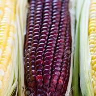 Porumb Purple Corn
