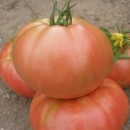 Tomate Rozov Blyan