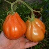Tomate Coeur d'Albenga