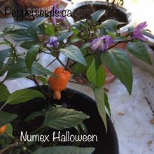 Ardei iute Numex Halloween