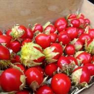 Litchi Tomato-Solanum Sisymbriifolium