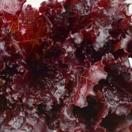 Salata Black Rose