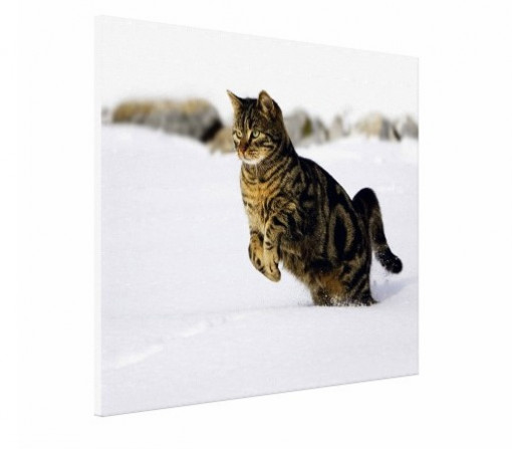 Tablou canvas - Pisici 05