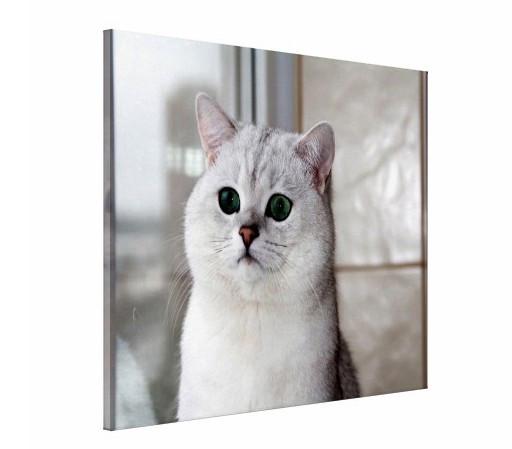 Tablou canvas - Pisici 09