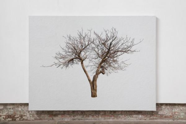 Finger Tree Apollo