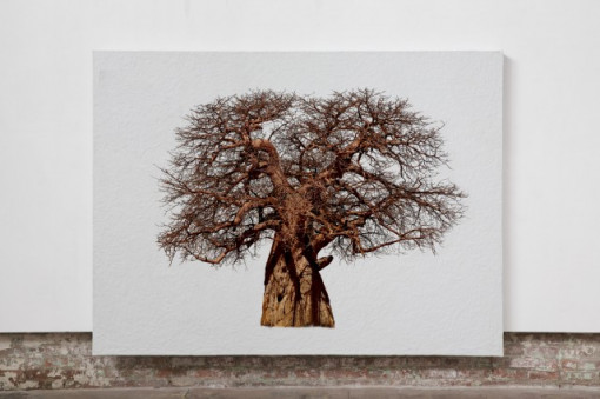 Finger Tree Zeus