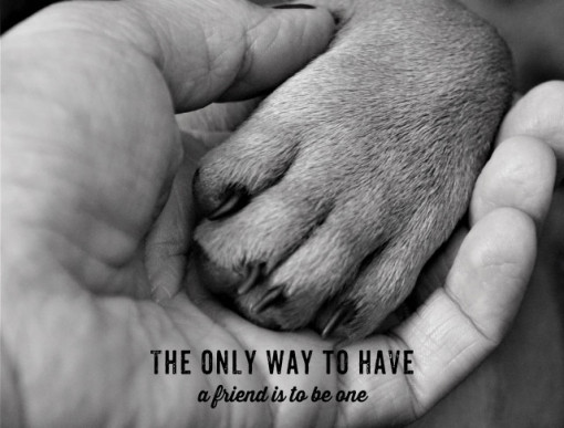 Tablou motivational - The only way to have a friend