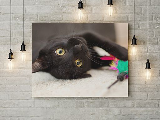 Tablou Canvas Cuteness